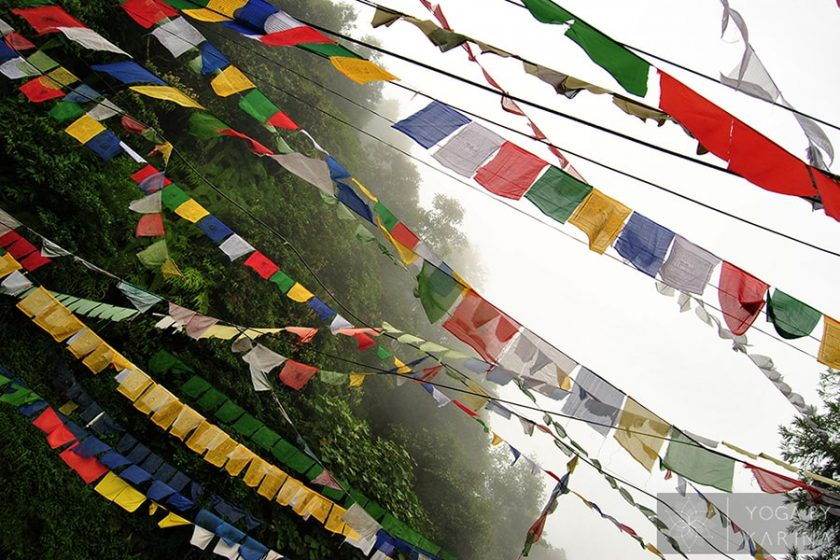 Yoga Philosophy: Ahimsa, the First Principle of Yama